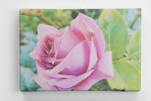Blue Moon rose canvas 20 x 30cm