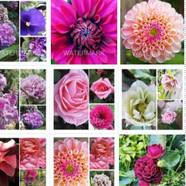Flower Photo Shop