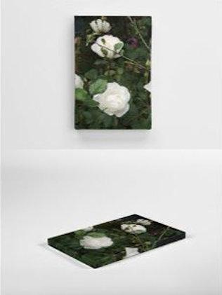 Desdemona rose canvas 20 x 30cm