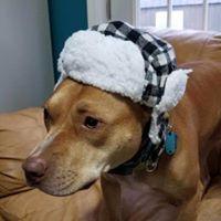 Radar loves his hats