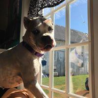 Ethel enjoying the sun