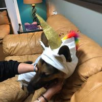 Lenny the unicorn (or unidog?)