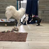 Puppy socialization time
