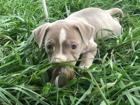 chewing.grass.jpg
