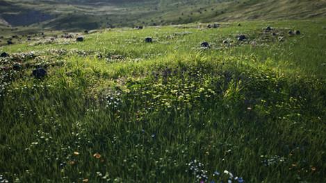 Procedural Grass