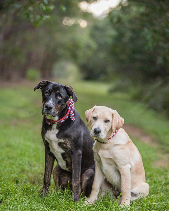 Buddy & Theo 🥰_._._._