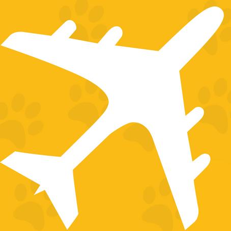 Flight Volunteer Fact Sheet