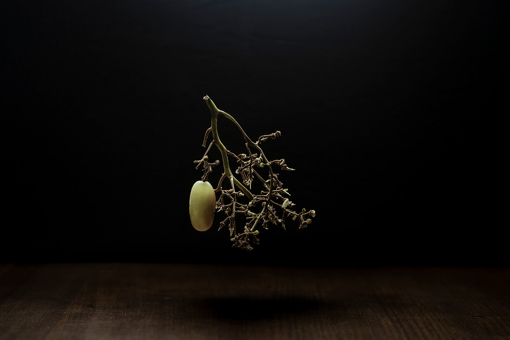 A still life image of a grape alone on the vine