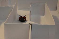 The Lady Bug (2010)