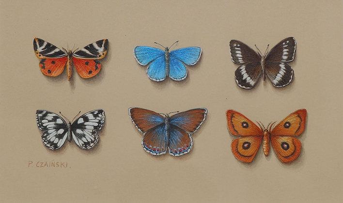 PAUL CZAINSKI   Butterflies