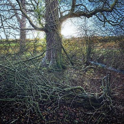MARTIN TAYLOR | Dark Wood