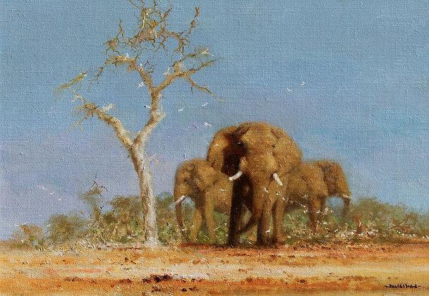 DAVID SHEPHERD | Elephant Country