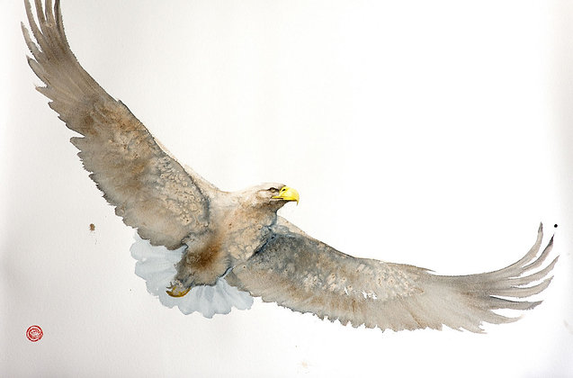 KARL MARTENS | White-Tailed Eagle