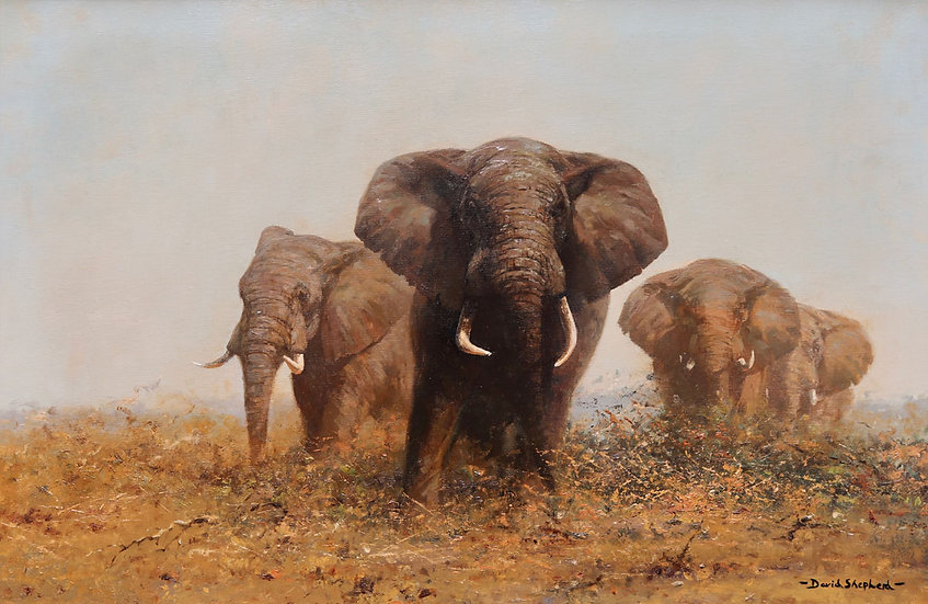 African Elephants in the Savanna