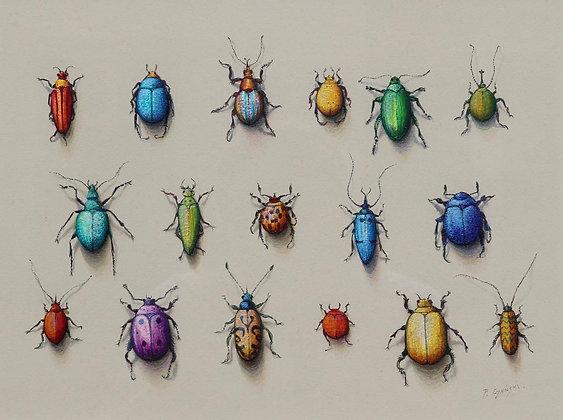 PAUL CZAINSKI | Seventeen Beetles