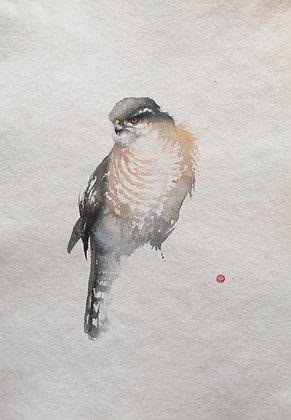 KARL MARTENS | Sparrow Hawk