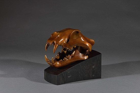 Tiger Skull