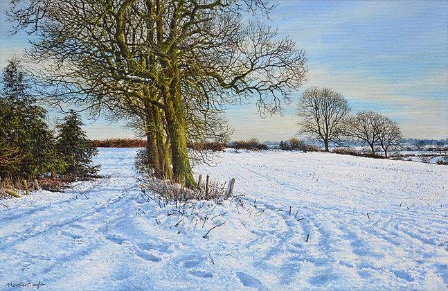 MARTIN TAYLOR | December Snow