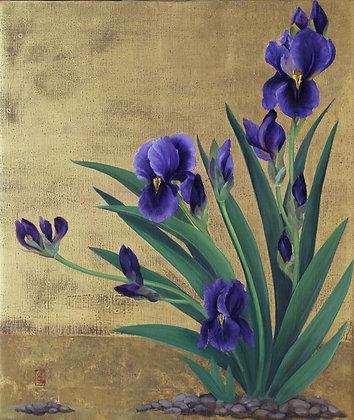 CLARISSA JAMES | Irises