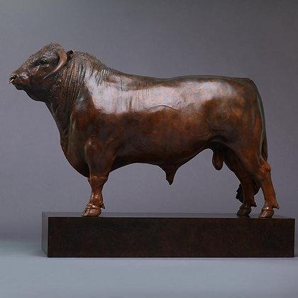 NICK BIBBY | British Longhorn Bull