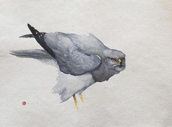 KARL MARTENS | Hen Harrier