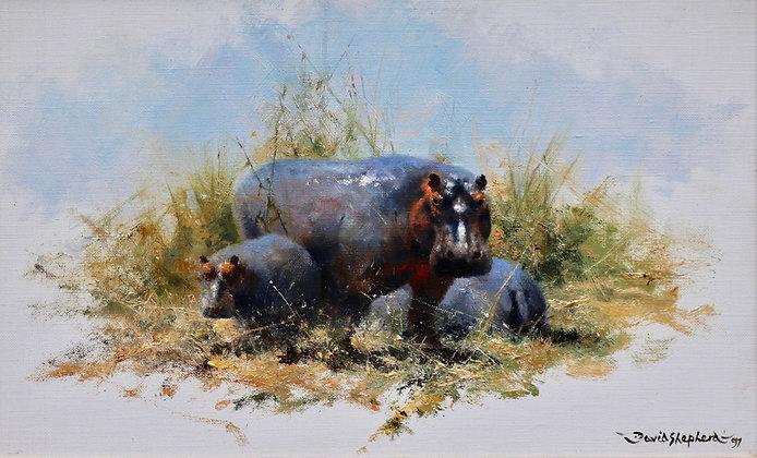 DAVID SHEPHERD | Hippos