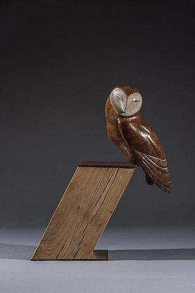 SIMON GUDGEON | Barn Owl on Slope