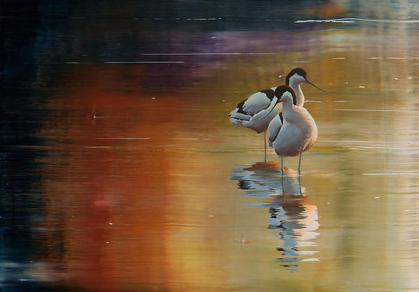 EMANUEL BERNSTONE | Avocets dancing on the lake