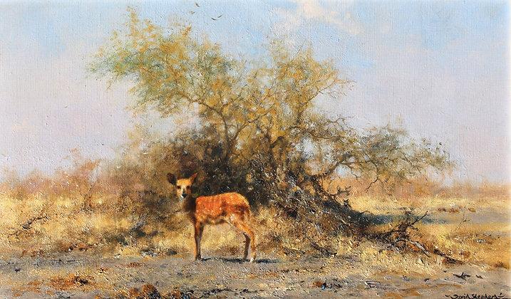 DAVID SHEPHERD | First Steps