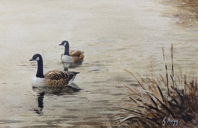 GEORGE HOGG | Canada Geese