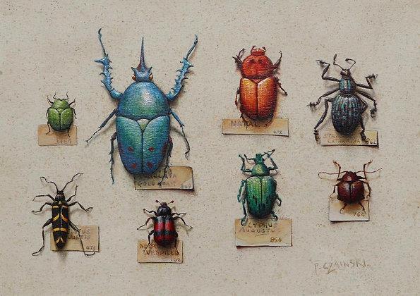 PAUL CZAINSKI | Creatures