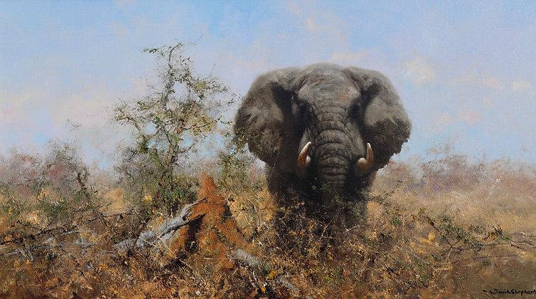 DAVID SHEPHERD | African Elephant