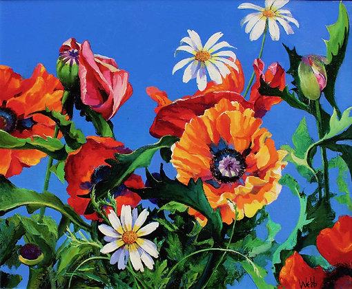 KENNETH WEBB | Summer Poppies