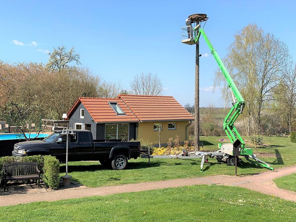 Viele Arbeitsstunden sind erforderlich für den Aufbau eines neuen Storchennestes. Ohne Erfahrung und einer Hebebühne geht es nicht!