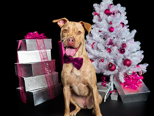 Tis' The Season - Preparing your dog for the holidays!