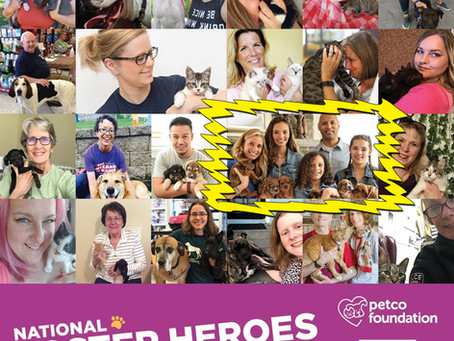 BIG NEWS - Peak Lab Foster Wins Petco Foundation National Foster Hero Award!