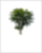 Forest Trees.png