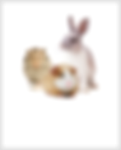 Hamsters-Guinea Pigs-Rabbits.png