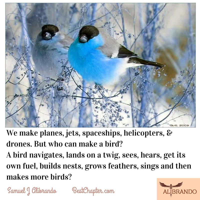 Nature is the inventor of bird abilities by Samuel J Alibrando