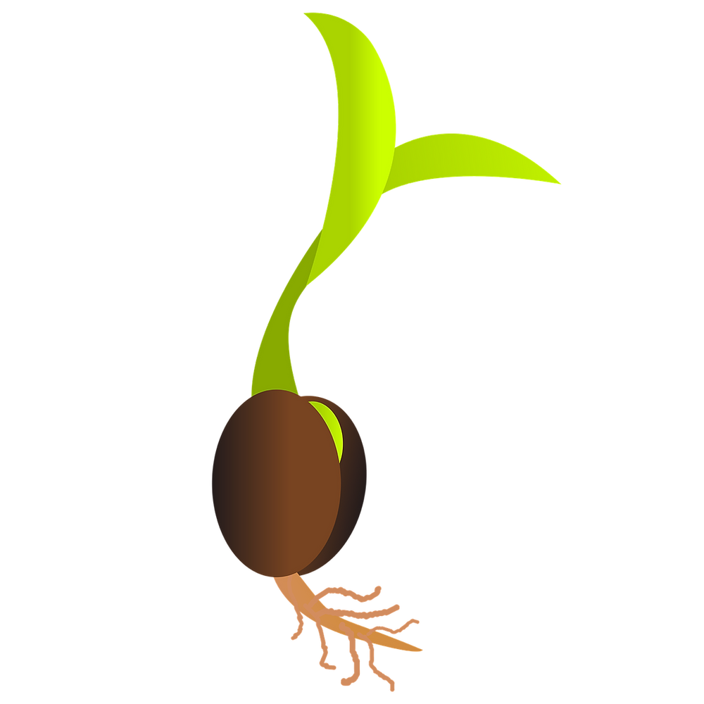 sprout graphic by OpenClipart-Vectors