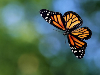 Caterpillar DNA to Butterfly (Enzymology)