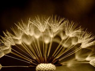 Does A Seed Die?