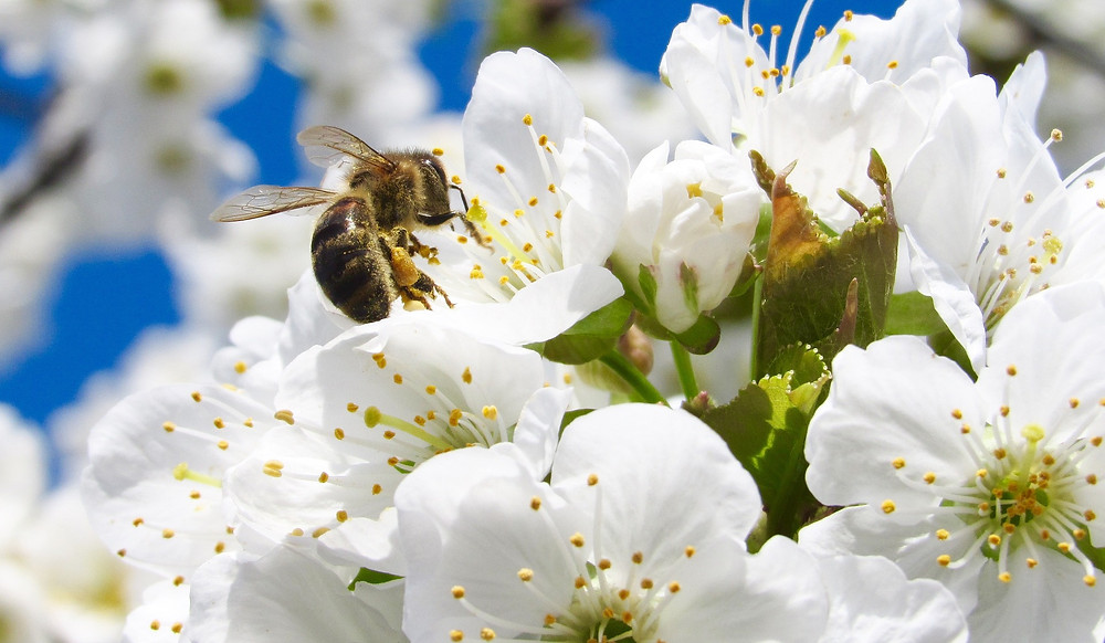 Bee Pollination shared by Wix Media