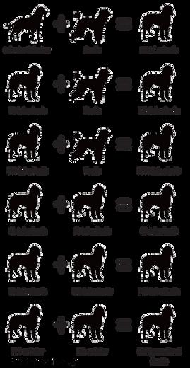 doodle-generations-1.png
