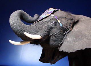 Psychological Evaluations and the Elephant in the Room