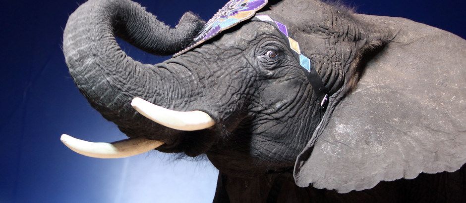 The Elephant in the Room (Or: Why You Work with a Travel Advisor)