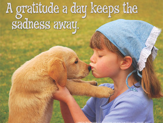 Cultivating an Attitude of Gratitude~