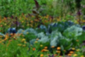 85b05d149d_131083_jardin-trou-serrure-1-