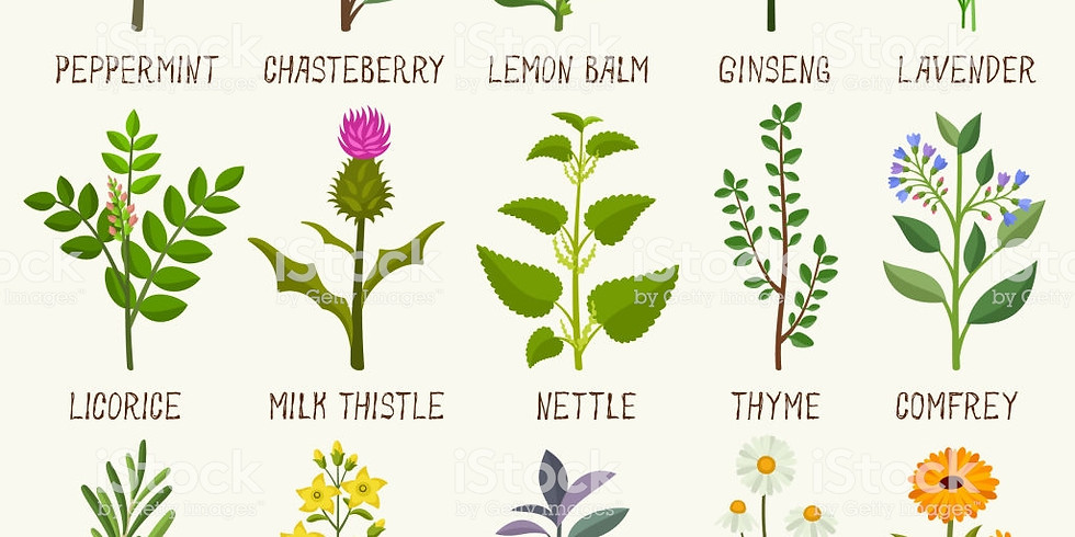 TALK: Herbs and Their Culinary and Medicinal Uses with Belinda Allen