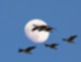 Screen Shot 2019-03-21 at 7.41.32 PM.png